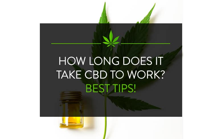 How Long does it Take CBD to Work? Best Tips